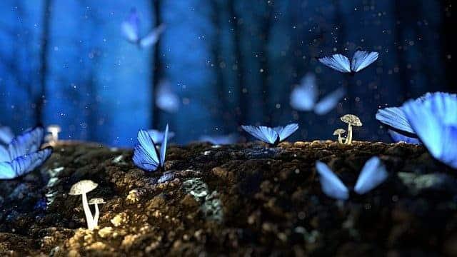 butterfly 2049567 640 1